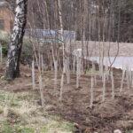 Native tree planting